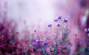 Purple pink flowers
